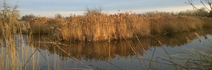 Boise Wetland