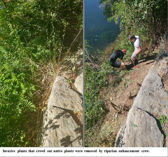 volunteers remove invasive plants